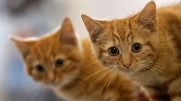 Rescatan 17 gatos de casa en Springfield