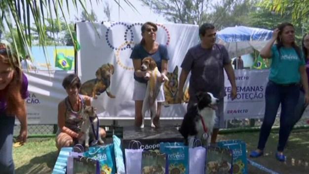 Celebran primeros juegos olímpicos para perros