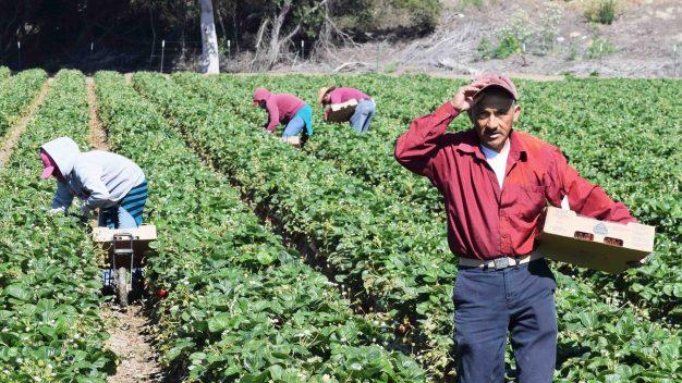 Proponen darles residencia a los trabajadores del campo