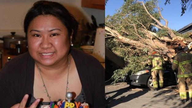 Muere una mujer al caer árbol sobre vehículo