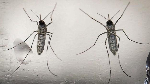 Prevén que sólo 2 extranjeros contraerán dengue en Olimpíadas