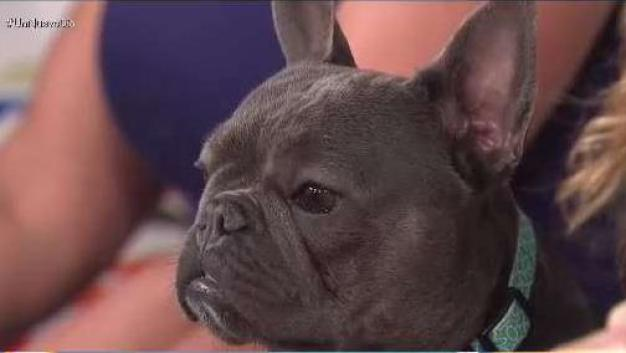 El entrenamiento que puede salvarle la vida a tu mascota o ahorrarte disgustos