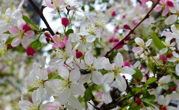 20 de marzo: Primer Día de la Primavera