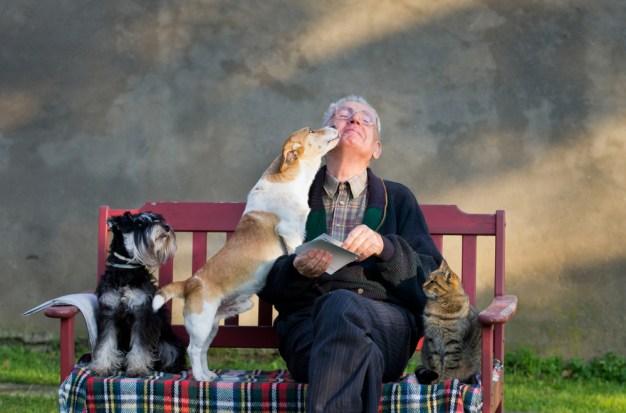 11 de las mejores razas de perros para personas mayores