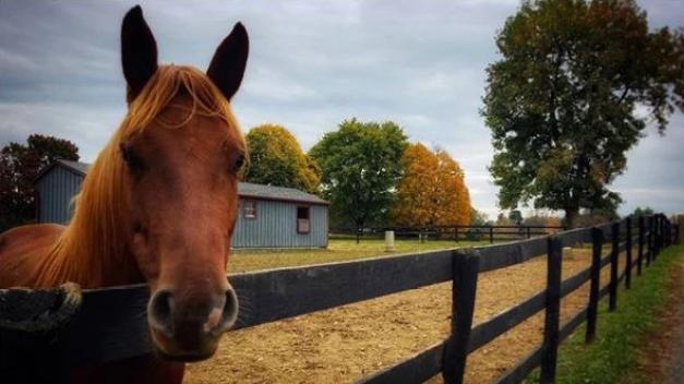 Equipo de rescate en Virginia busca nuevo hogar para caballos