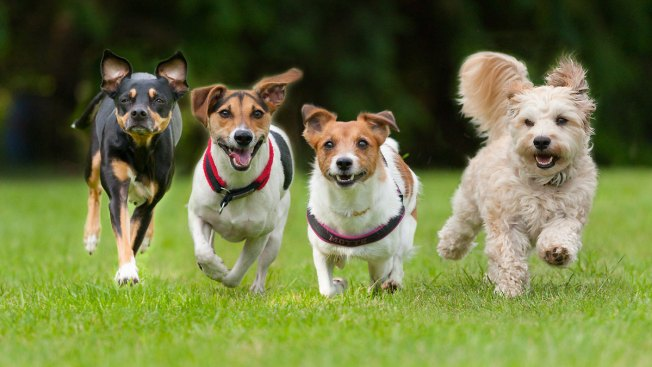 ¿Deberías adoptar un perro? Estas preguntas te ayudarán a decidir