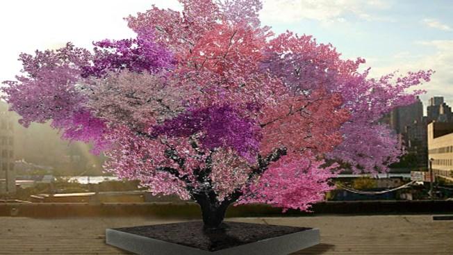 Árbol produce 40 tipos de frutos por sí mismo