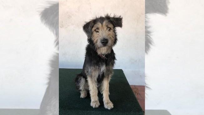 Perro callejero rescatado acaba de protagonista en película de Disney