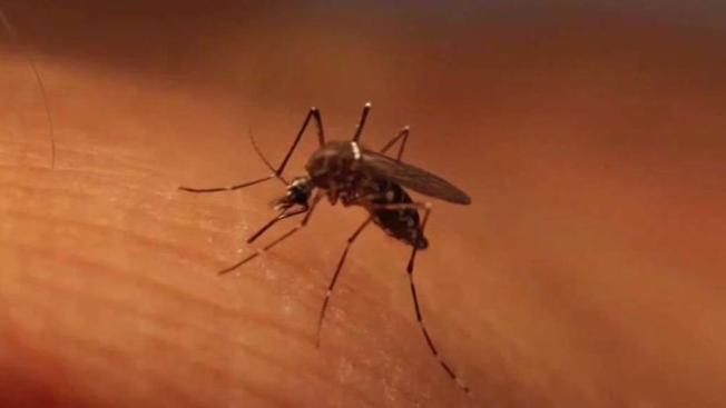 Primeros casos humanos de Virus del Nilo en Connecticut