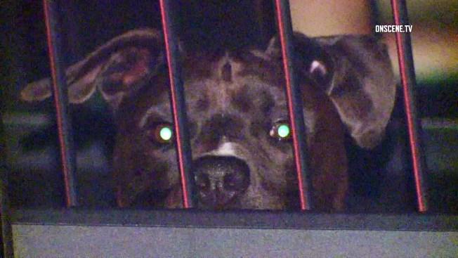 Perro provoca alboroto en estación de policía
