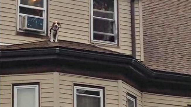 Así acabó rescate de perro paseando en un techo