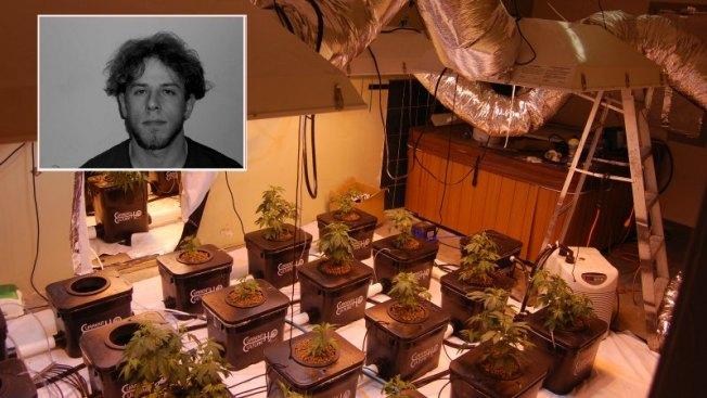 """""""Alucinante"""" cultivo de marihuana en una casa"""