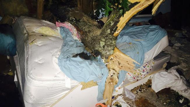 Sobrevive tras caerle un árbol de 5,000 libras