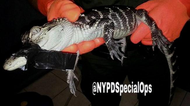 Brooklyn: Confiscan colección de animales exóticos