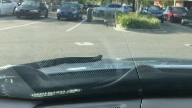 Víbora sale por la cubierta de un vehículo en la Florida