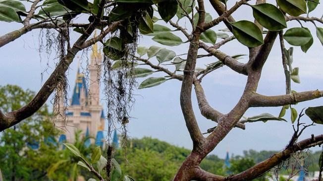 Denuncian robo de artículos en parque de Disney de miles de dólares