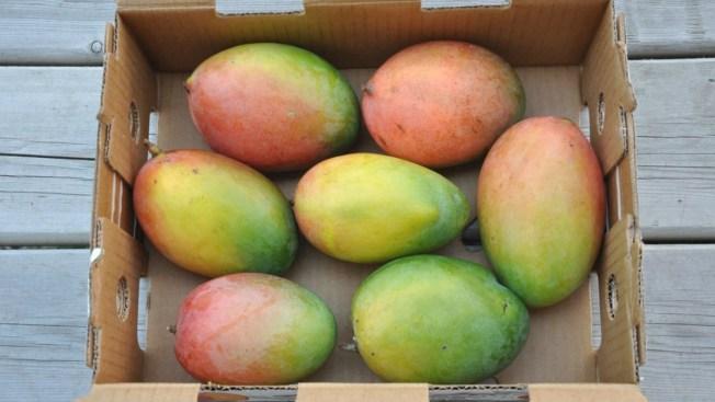 Cocaína en caja de mangos enviada a domicilio