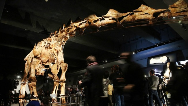 Titanosaurio: el misterioso gigante que reinó en la Patagonia