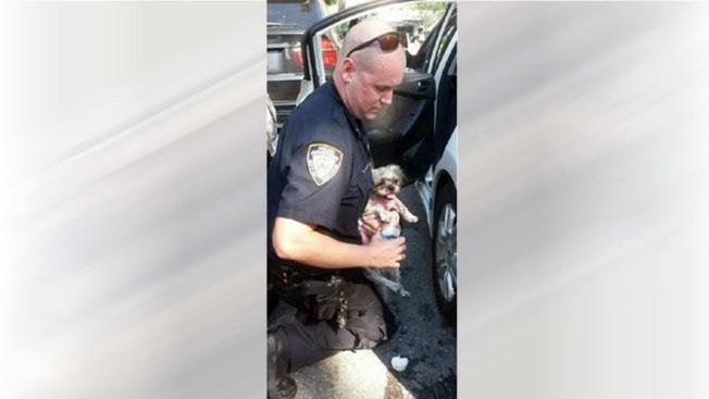Queens: Rescatan a perrito atrapado en un auto