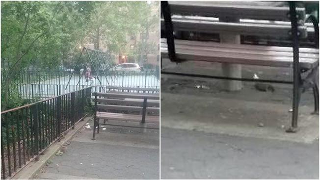 Ratas invaden área de juego de niños en parque de NY