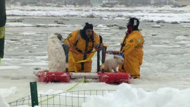 Hombre y sus perros rescatados de un pantano