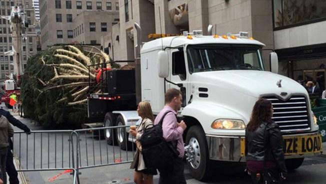 Levantan árbol navideño en Nueva York