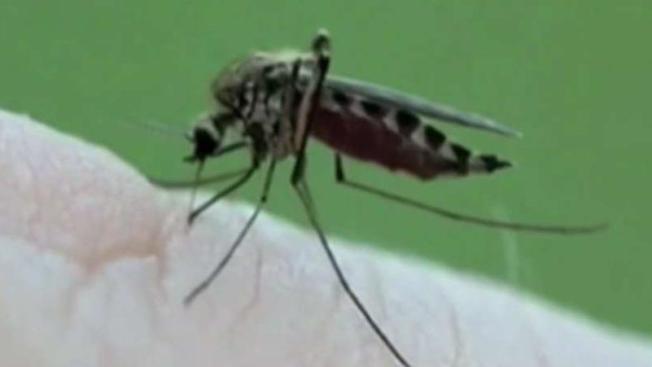 Muere 3ra persona por virus EEE en Massachusetts