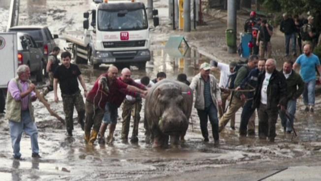 Inundación mortal deja animales sueltos
