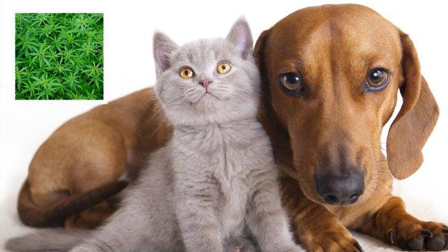 ¿Marihuana para mascotas?