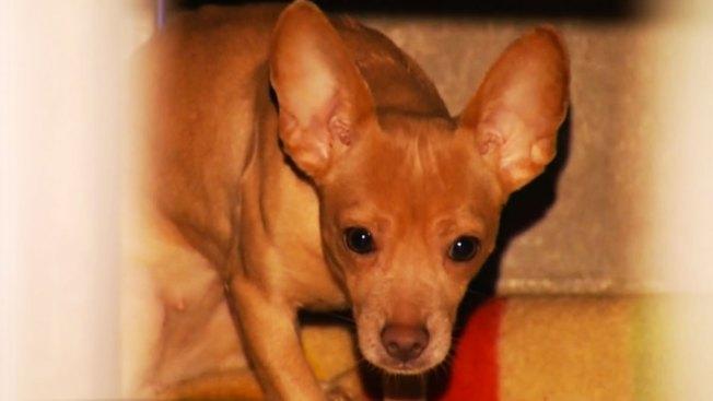 Indignación por abandono de 44 perros