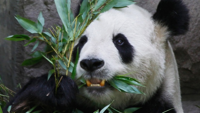 Muere pandita de Washington