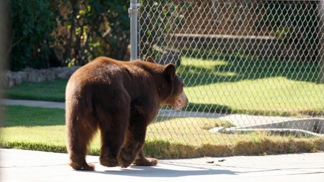 Hombre ahuyenta a oso a palos limpios en NY
