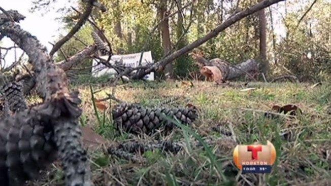 Tras tornado, cae árbol y lo mata