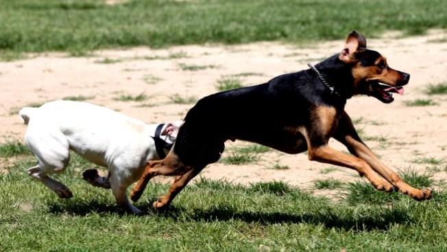 Brote de parvovirus canino en Lowell