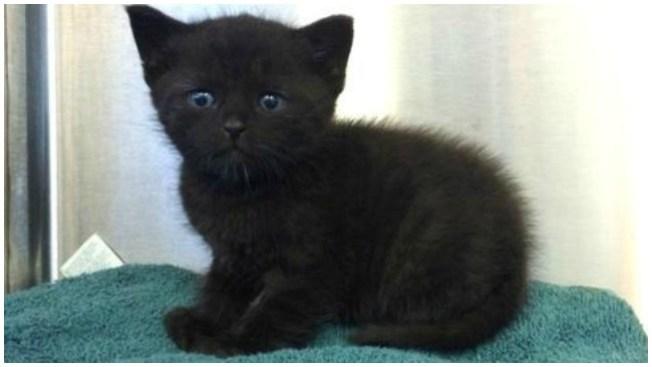 ¿Cómo rescatar cinco gatitos sin madre?
