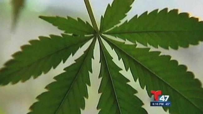 Marihuana: Cuestión de vida