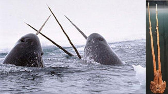 Desmantelan red caza ballenas