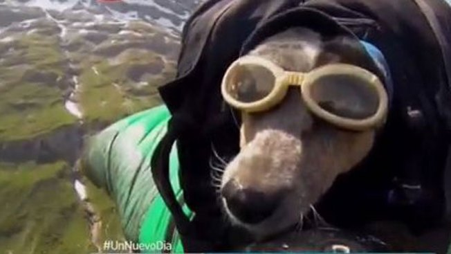 Perro se lanza al vacío en paracaídas