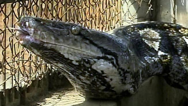 Quema su casa por matar una culebra telemundo 47 for Casa jardin culebra