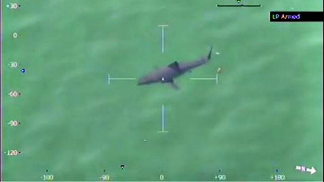 Advierten a bañistas por tiburón blanco