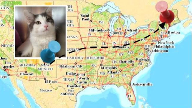 Gata aparece a 2,300 millas de su casa