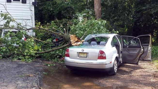 NJ; Estudiante muere aplastado por un árbol