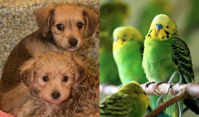 Rescatan animales en apartamento en Lawrence