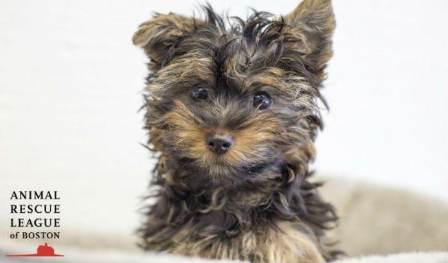 VIDEO: Se recupera perrito lanzado de auto