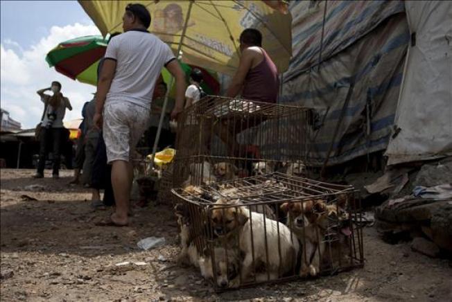 China: Protestan ante festival de carne de perro