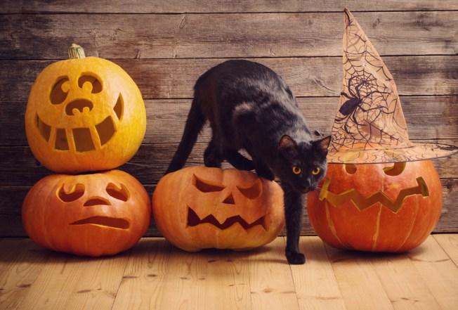 El peligro oculto de Halloween para los animales