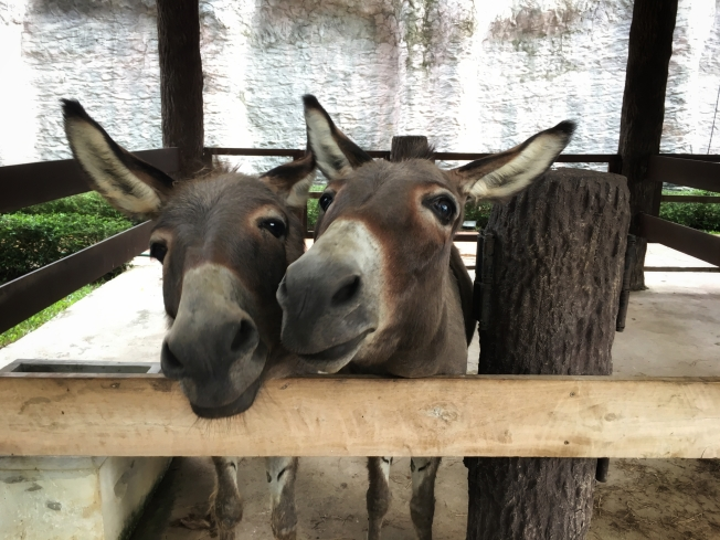 Remueven burro de hogar en Rhode Island