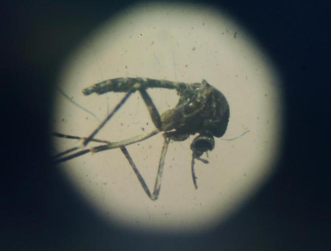Más información sobre el virus del Zika