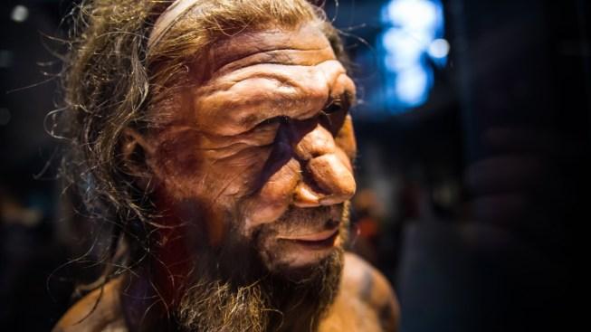 Encuentran posible causa de desaparición de neandertales