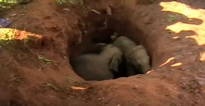 [TLMD - NATL] Giro inesperado en rescate de dos elefantitos